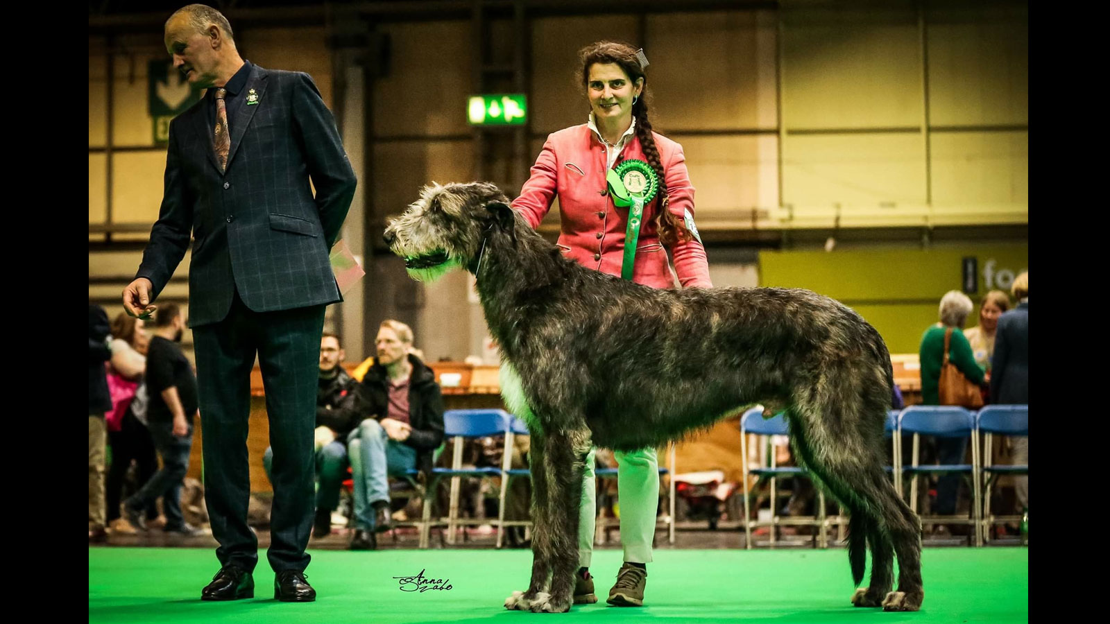 Pendragon dBP – BOB BOG3 at Crufts 2019